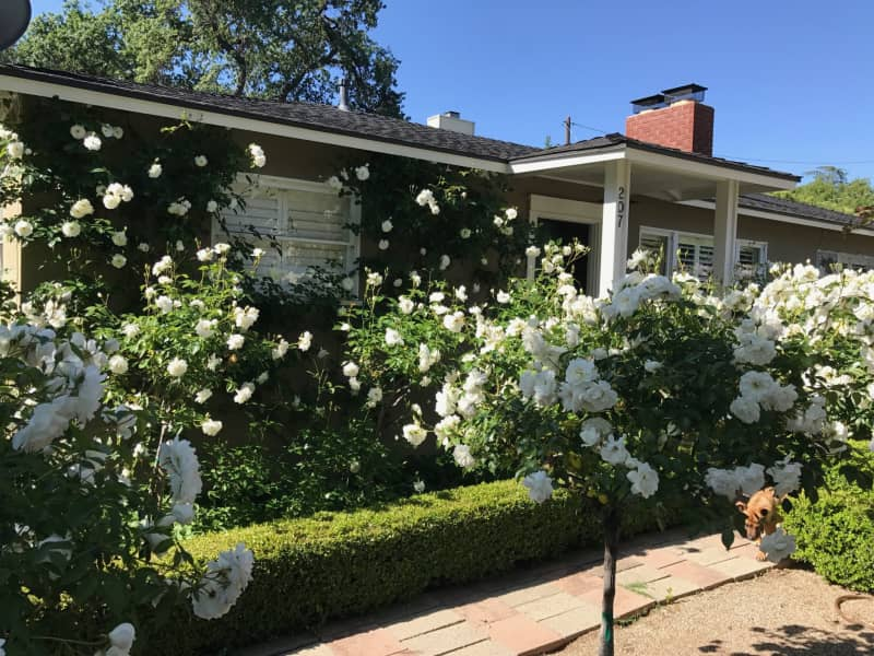 Housesitting assignment in Ojai, California, United States