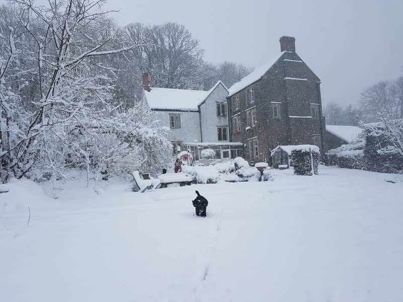 Housesitting assignment in Temple Cloud, United Kingdom