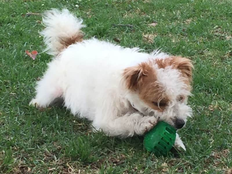 Housesitting assignment in Stanmore, New South Wales, Australia