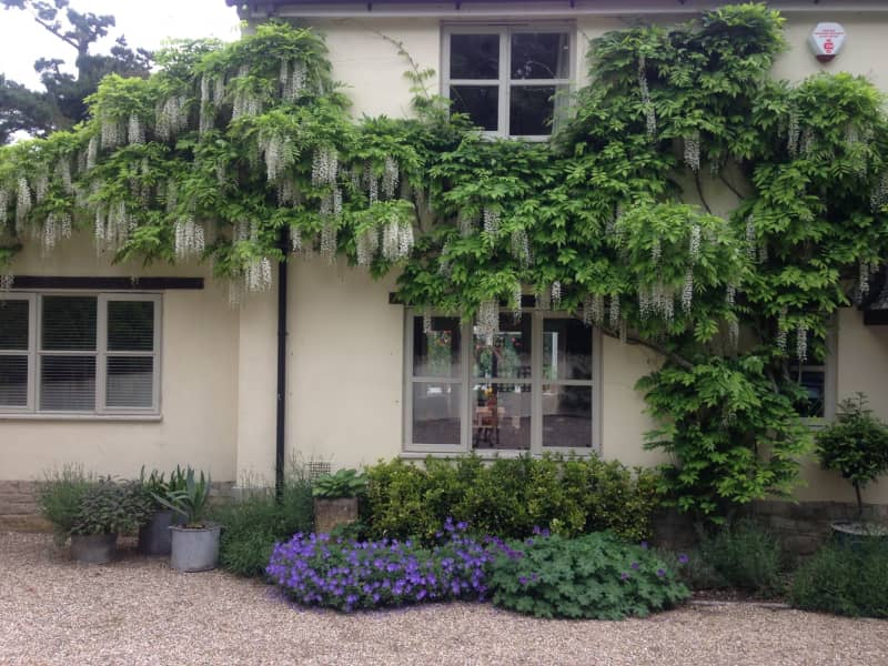 Housesitting assignment in Cerne Abbas, United Kingdom