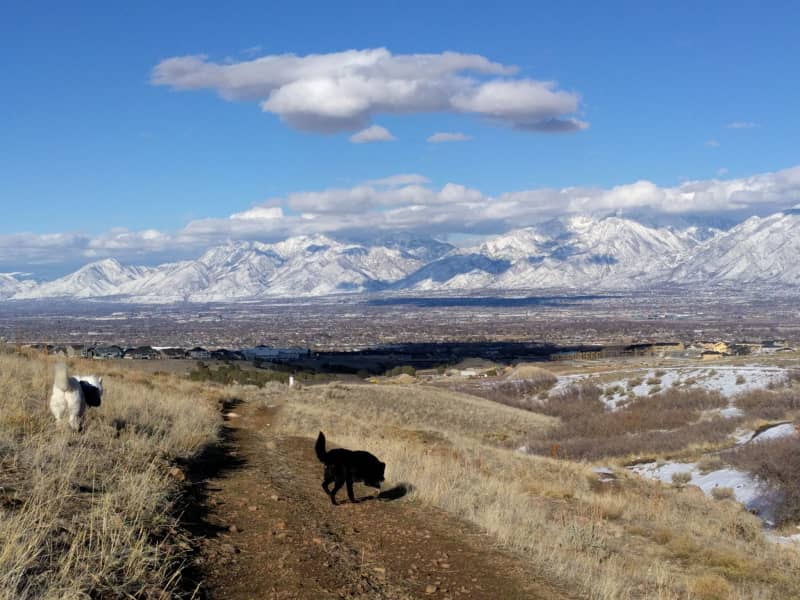 Housesitting assignment in Riverton, Utah, United States