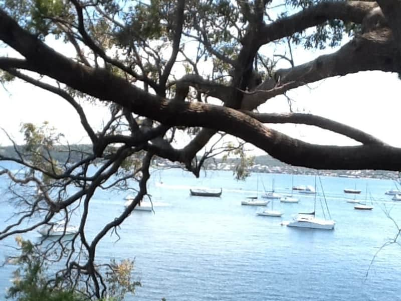 Housesitting assignment in Belmont, New South Wales, Australia