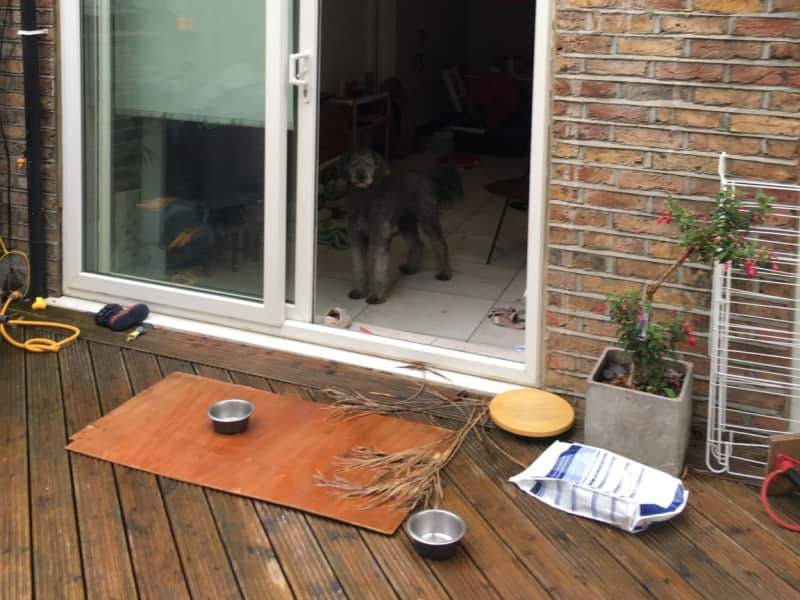 Housesitting assignment in Swiss Cottage, United Kingdom