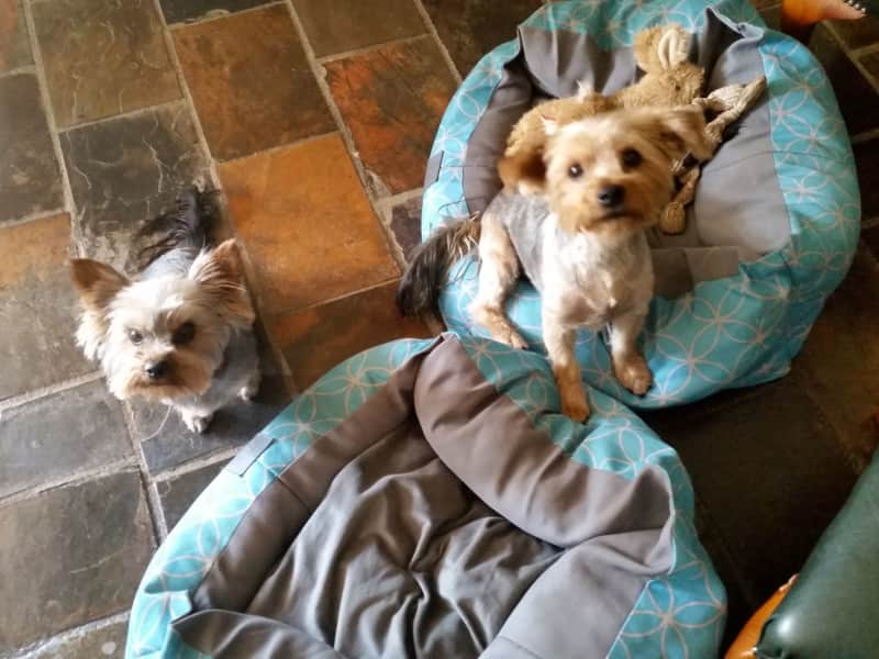 Housesitting assignment in Wantirna South, Victoria, Australia