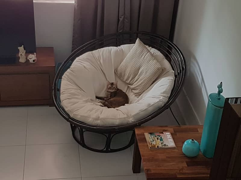 Housesitting assignment in Holland Village, Singapore