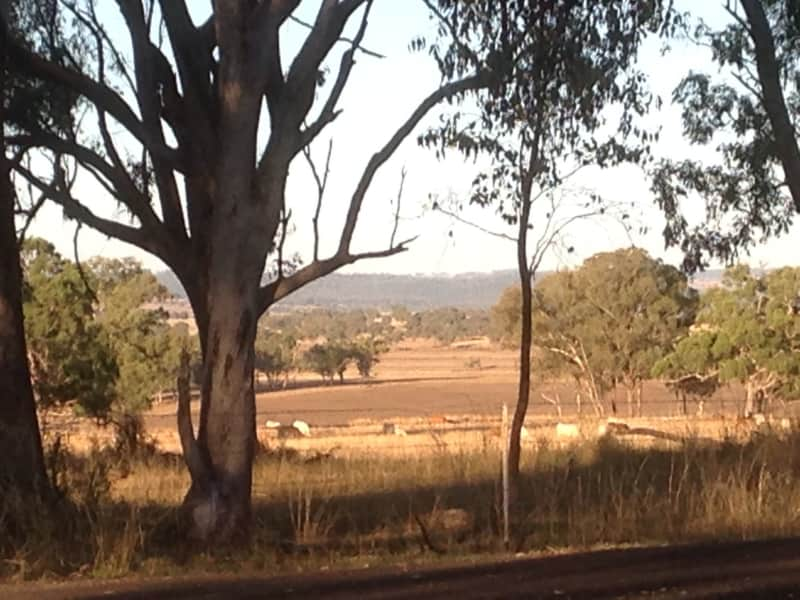 Housesitting assignment in Inverell, New South Wales, Australia
