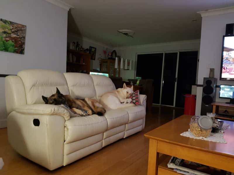 Housesitting assignment in Perth, Western Australia, Australia