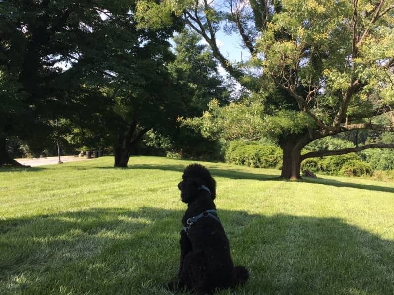 Housesitting assignment in Washington, D.C., Washington, D.C., United States