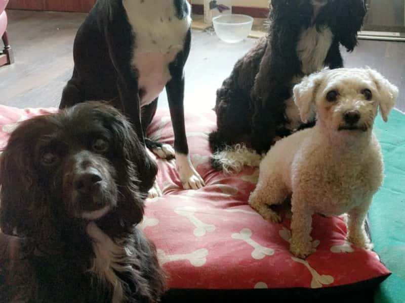 Housesitting assignment in Keith, United Kingdom