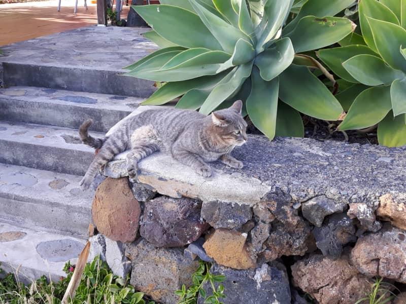 Housesitting assignment in Santa Cruz de la Palma, Spain