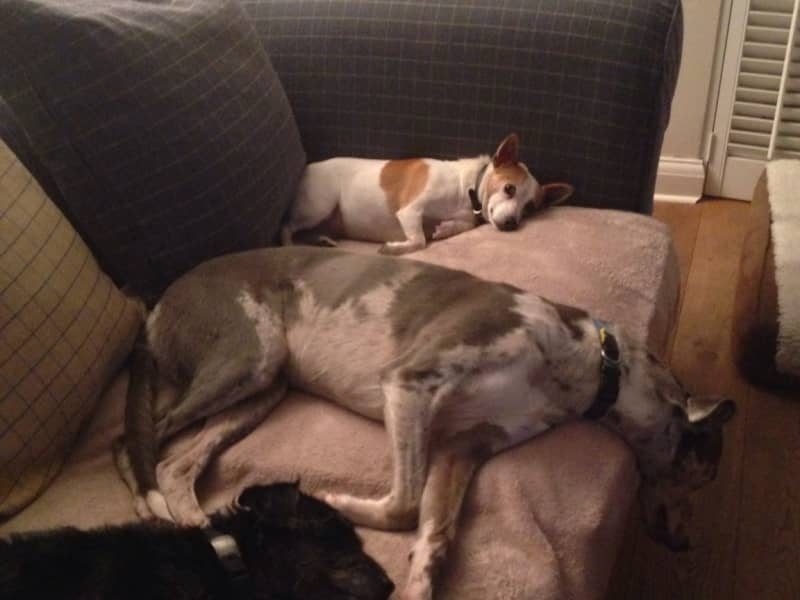 Housesitting assignment in Kingston upon Thames, United Kingdom