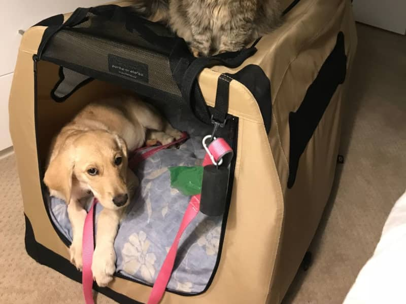 Housesitting assignment in Lakewood, Colorado, United States