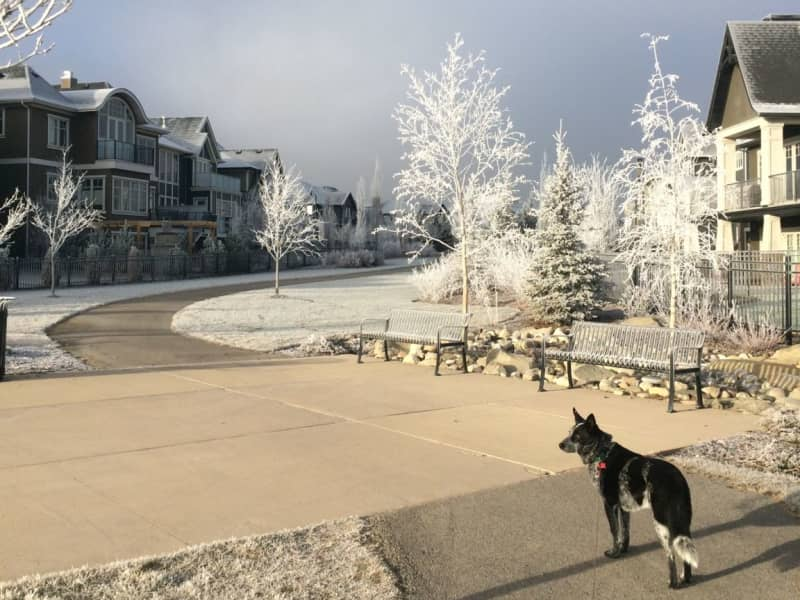 Housesitting assignment in Airdrie, Alberta, Canada