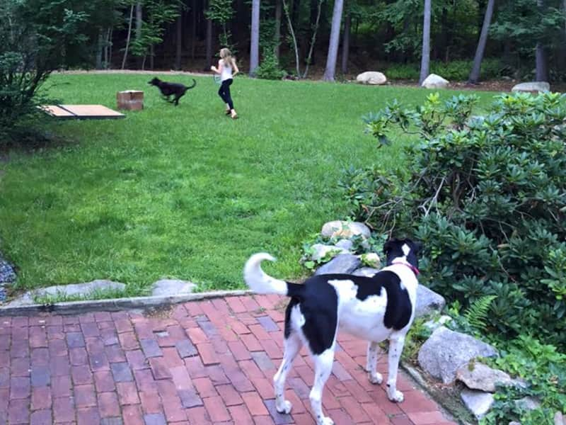 Housesitting assignment in Concord, Massachusetts, United States