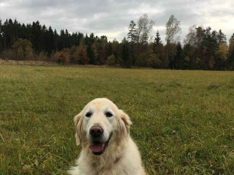 Housesitting assignment in Haar, Germany