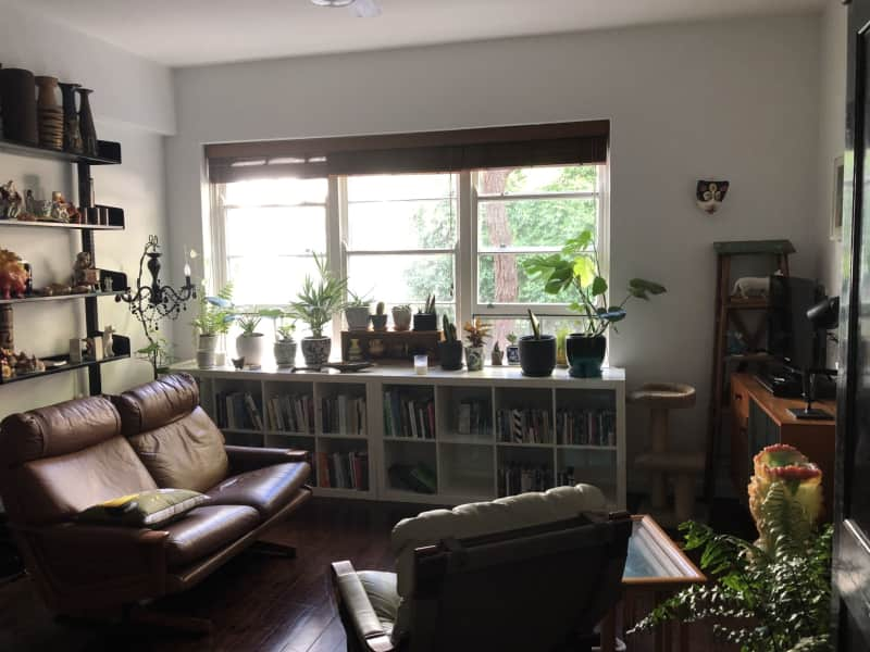 Housesitting assignment in Elizabeth Bay, New South Wales, Australia