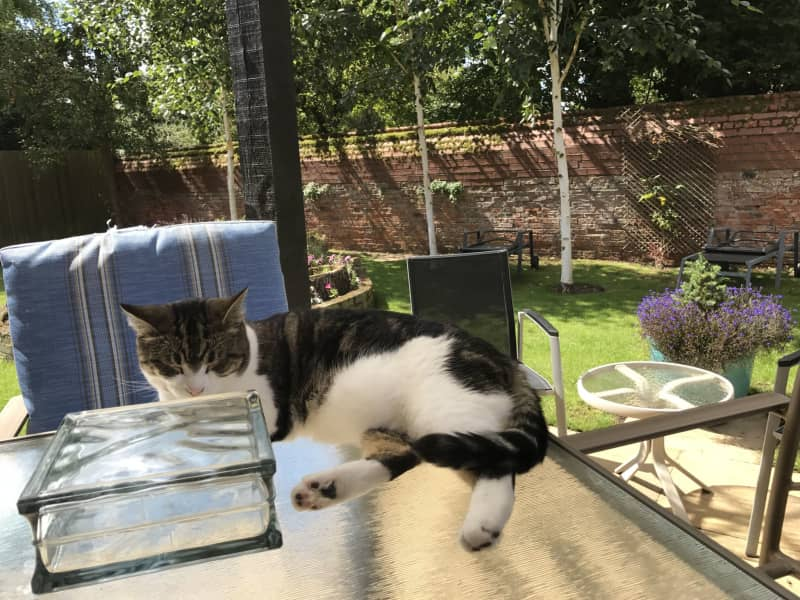 Housesitting assignment in Bourne, United Kingdom