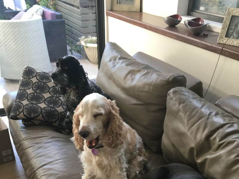 Housesitting assignment in Burradoo, New South Wales, Australia