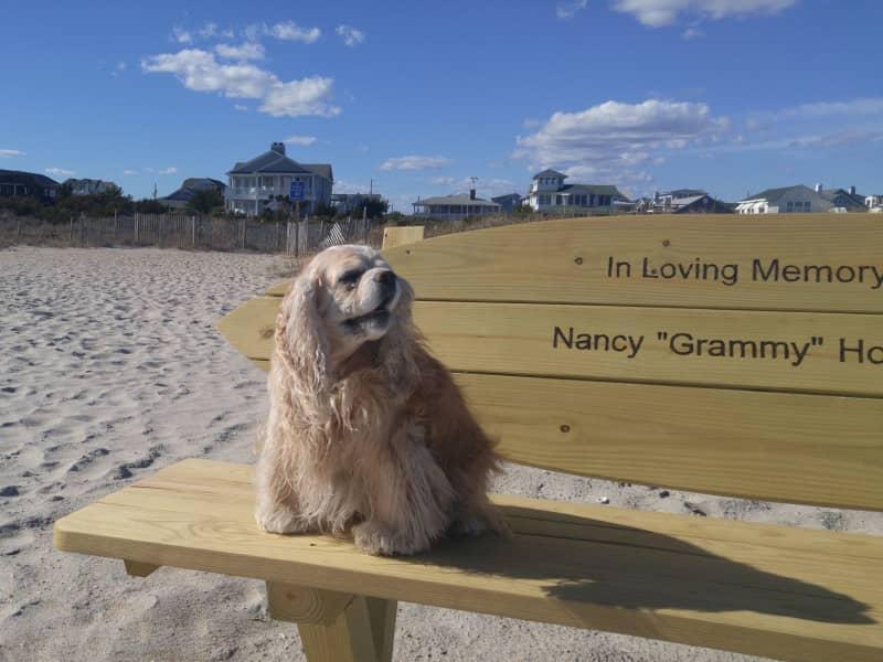 Housesitting assignment in Wrightsville Beach, North Carolina, United States