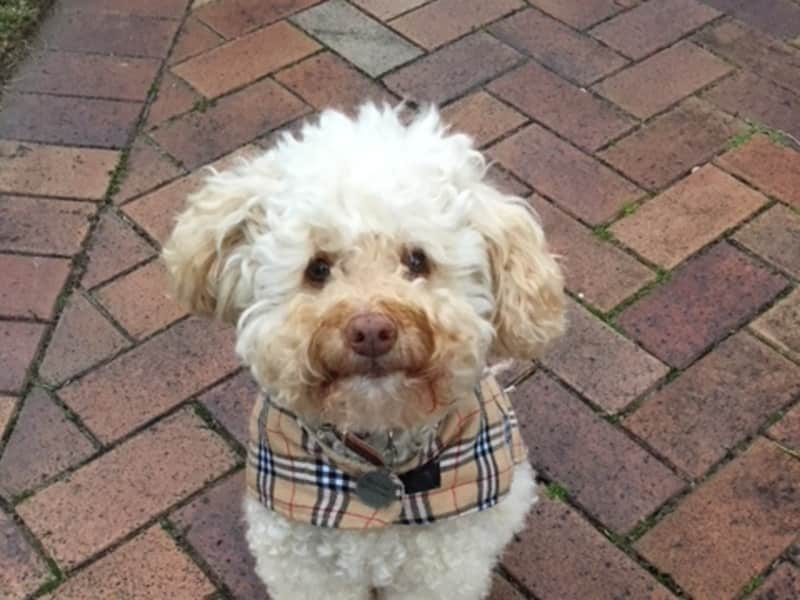 Housesitting assignment in Lindfield, New South Wales, Australia