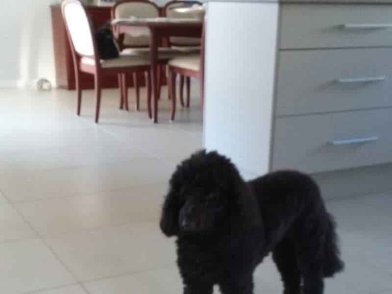 Housesitting assignment in Lake Cathie, New South Wales, Australia