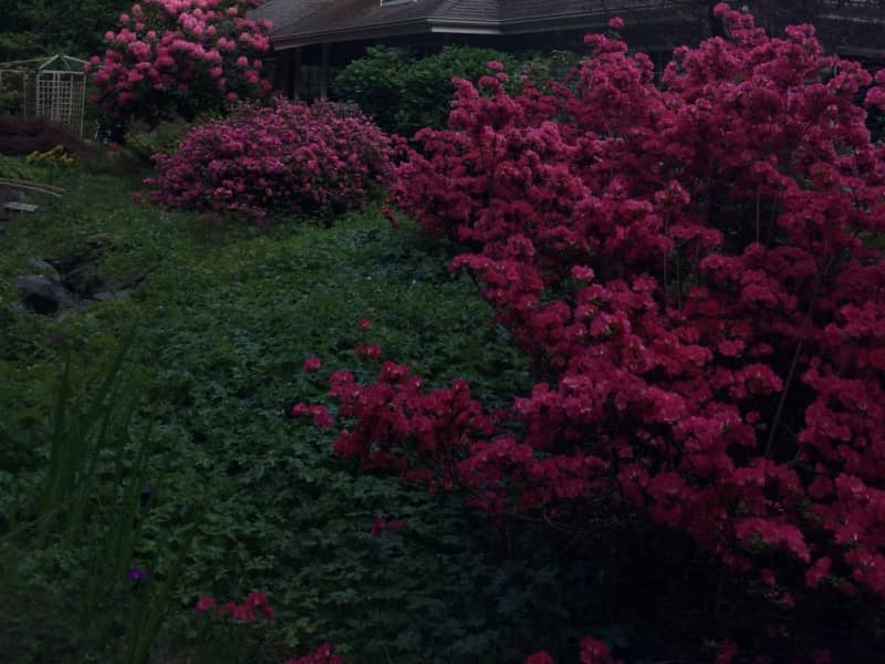 Housesitting assignment in Poulsbo, Washington, United States