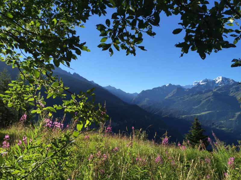 Housesitting assignment in Verbier, Switzerland