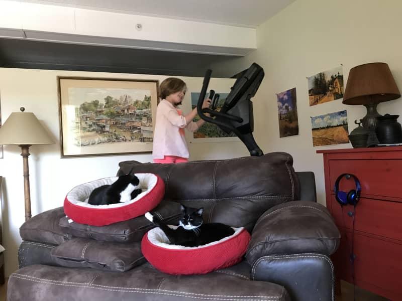 Housesitting assignment in Watertown, Massachusetts, United States