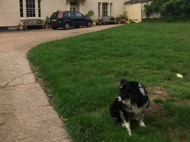 Housesitting assignment in Lapford, United Kingdom
