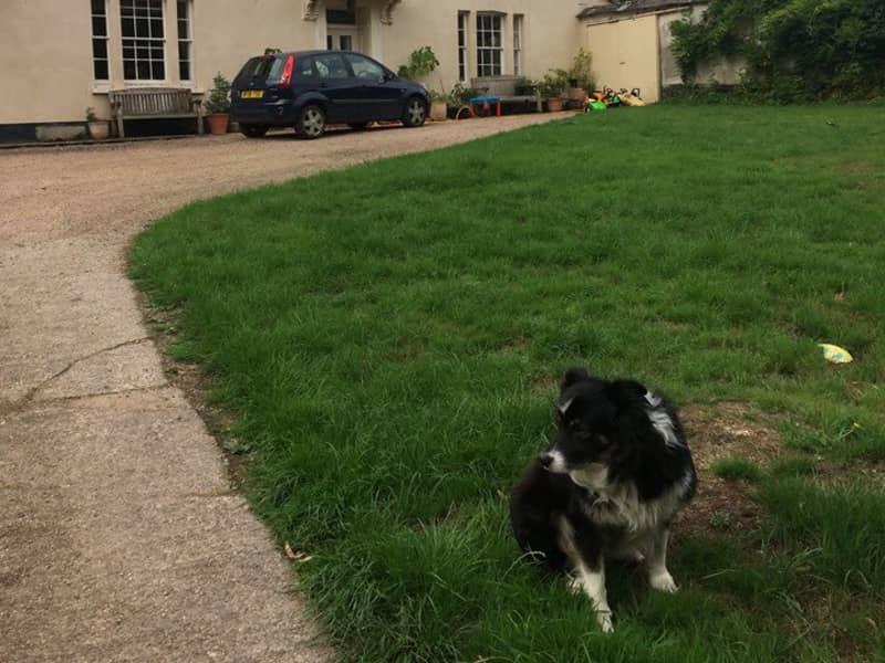 Housesitting assignment in Lapford, United Kingdom