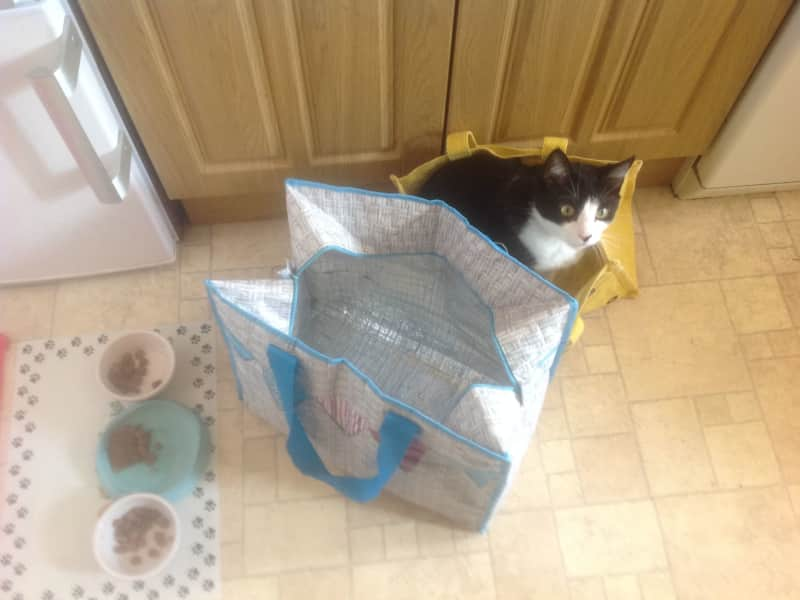 Housesitting assignment in Whitstable, United Kingdom
