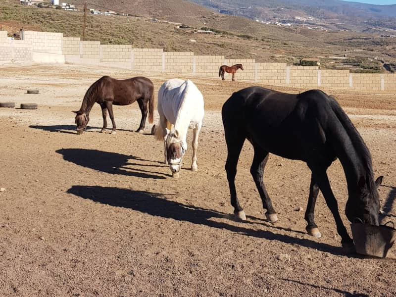 Housesitting assignment in Santa Cruz de Tenerife, Spain