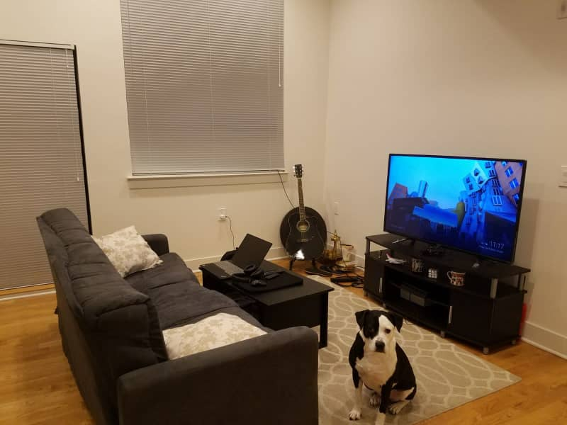 Housesitting assignment in Jersey City, New Jersey, United States