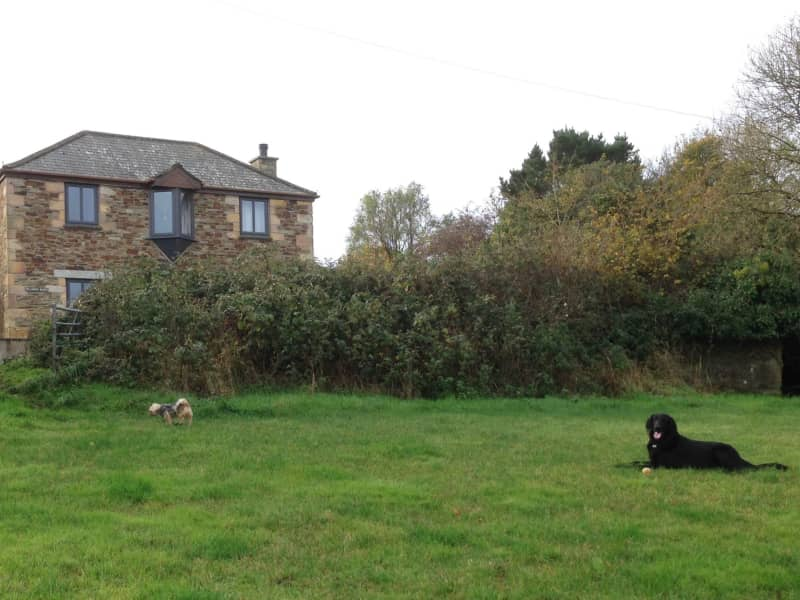 Housesitting assignment in Mevagissey, United Kingdom