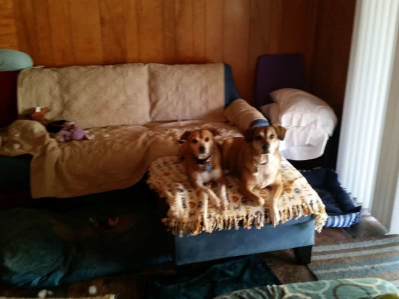 Housesitting assignment in Tomah, Wisconsin, United States