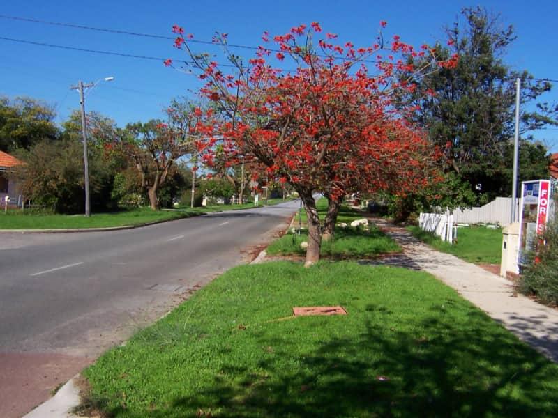 Housesitting assignment in Hilton, Western Australia, Australia