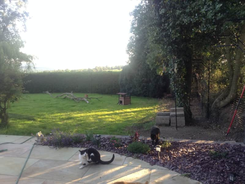 Housesitting assignment in Mallow, Ireland