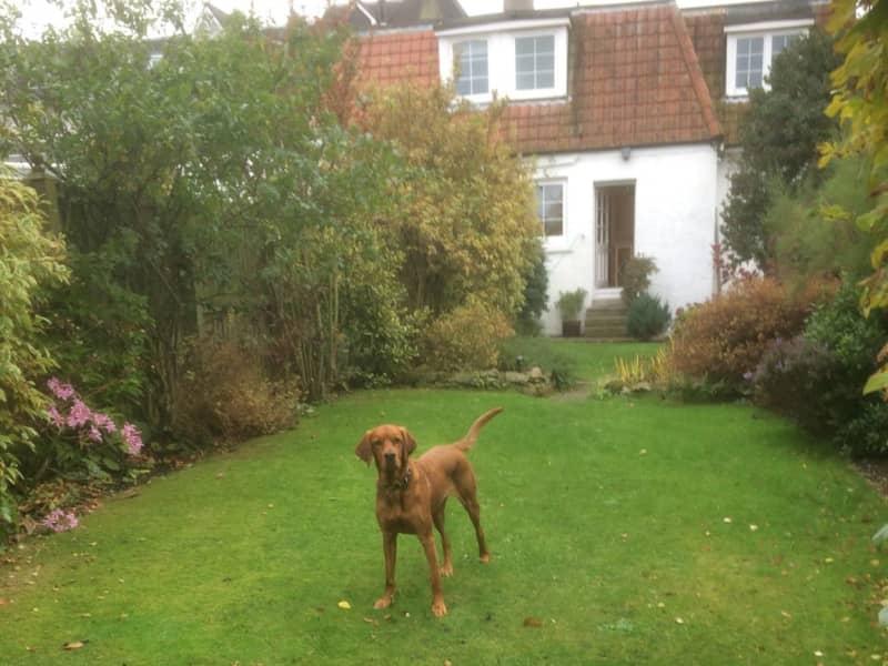 Housesitting assignment in North Berwick, United Kingdom