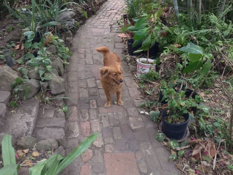 Housesitting assignment in Oranjestad, Bonaire, Saint Eustatius and Saba