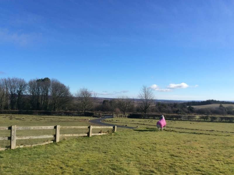 Housesitting assignment in Kirkbymoorside, United Kingdom