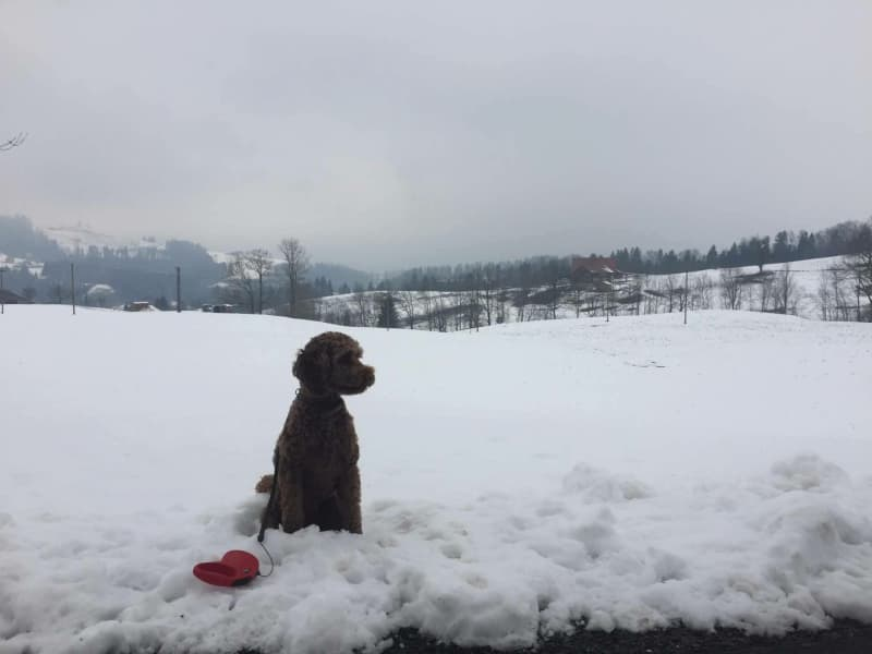 Housesitting assignment in Unterägeri, Switzerland