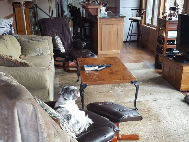 Housesitting assignment in Port Severn, Ontario, Canada