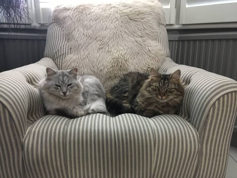 Housesitting assignment in Battersea, United Kingdom
