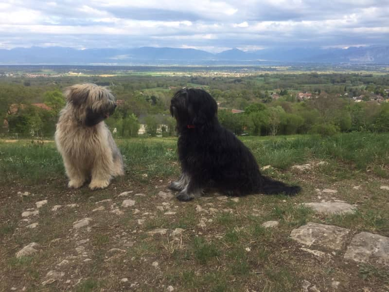 Housesitting assignment in Échenevex, France