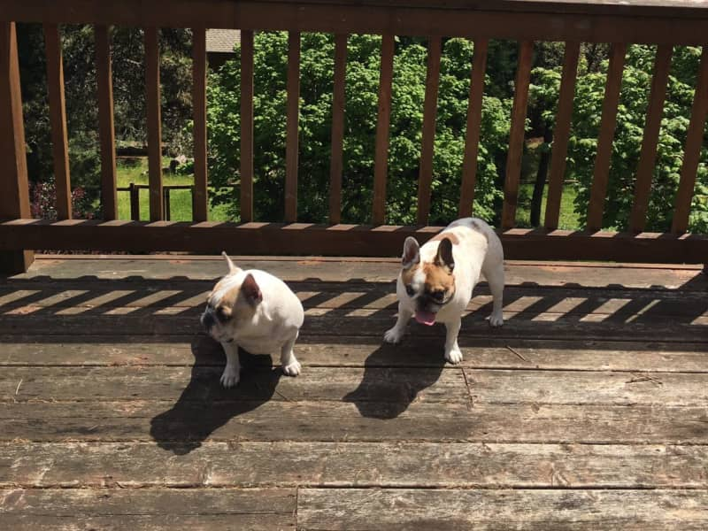 Housesitting assignment in Dundee, Oregon, United States