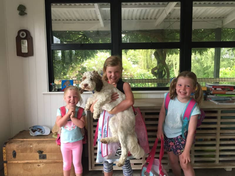 Housesitting assignment in Mapua, New Zealand