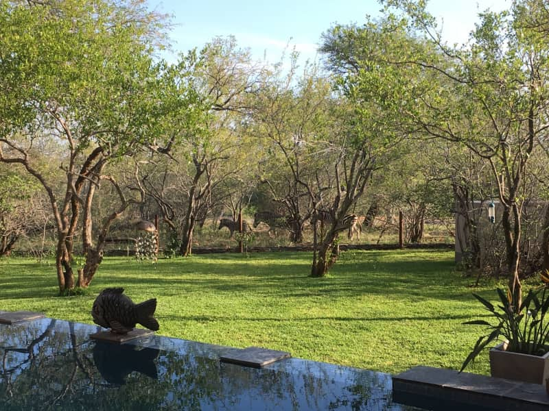 Housesitting assignment in Hoedspruit, South Africa