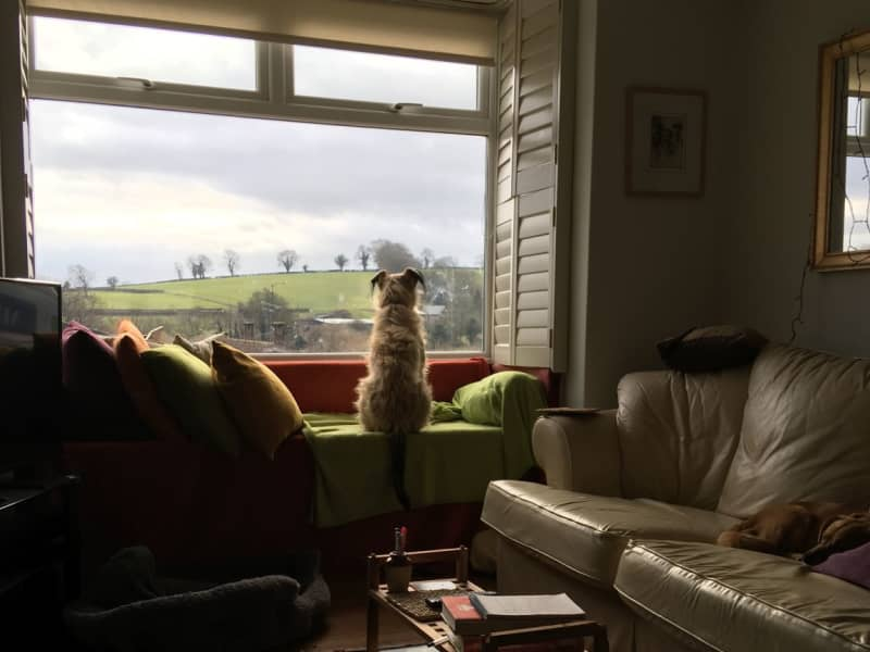 Housesitting assignment in Much Wenlock, United Kingdom