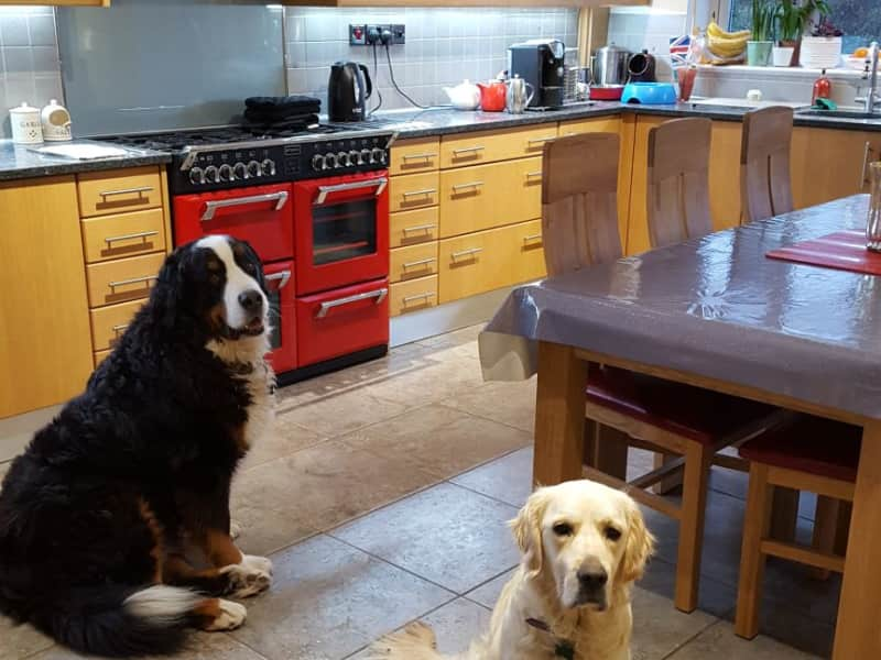 Housesitting assignment in Chippenham, United Kingdom