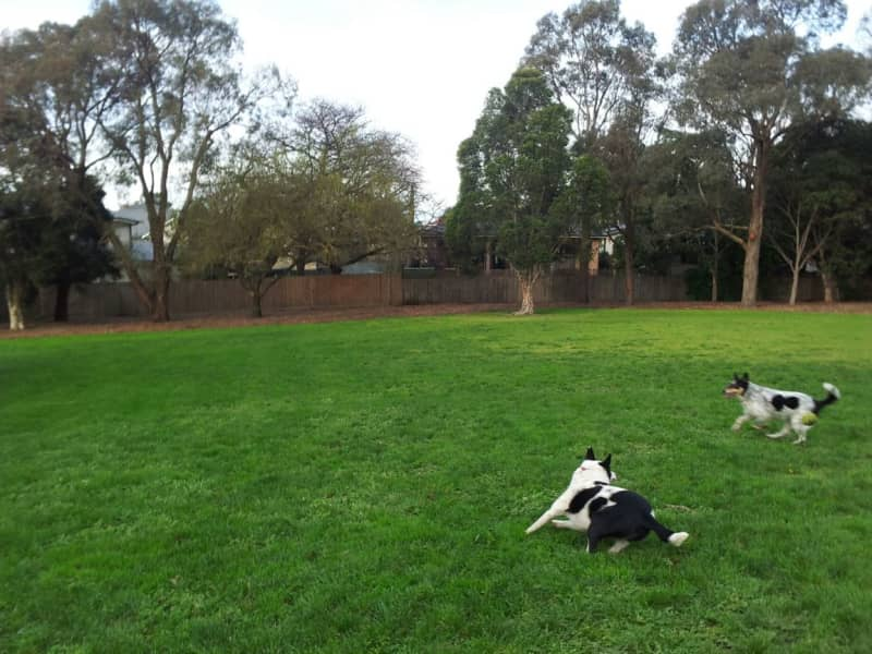 Housesitting assignment in Nunawading, Victoria, Australia